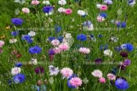 Background of wildflowers, flower texture