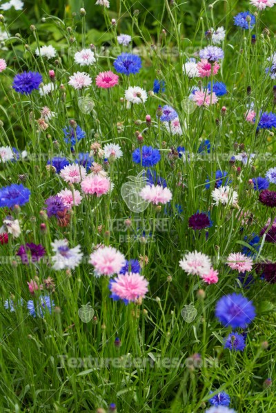 Background of wildflowers, meadow field
