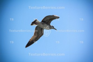 Seagull flies in the blue sky
